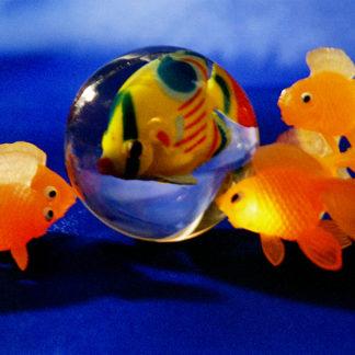 Zan van Alderwegen - Goldfish - Kunstadvies Hanneke Janssen